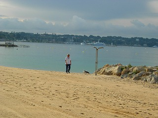 à la plage avec son chien