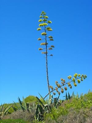 腐海の植物