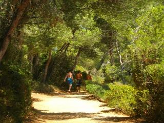 -海岸沿いの森の小道